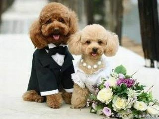 Rencontre femme divorcée ou veuve algerie picture 4